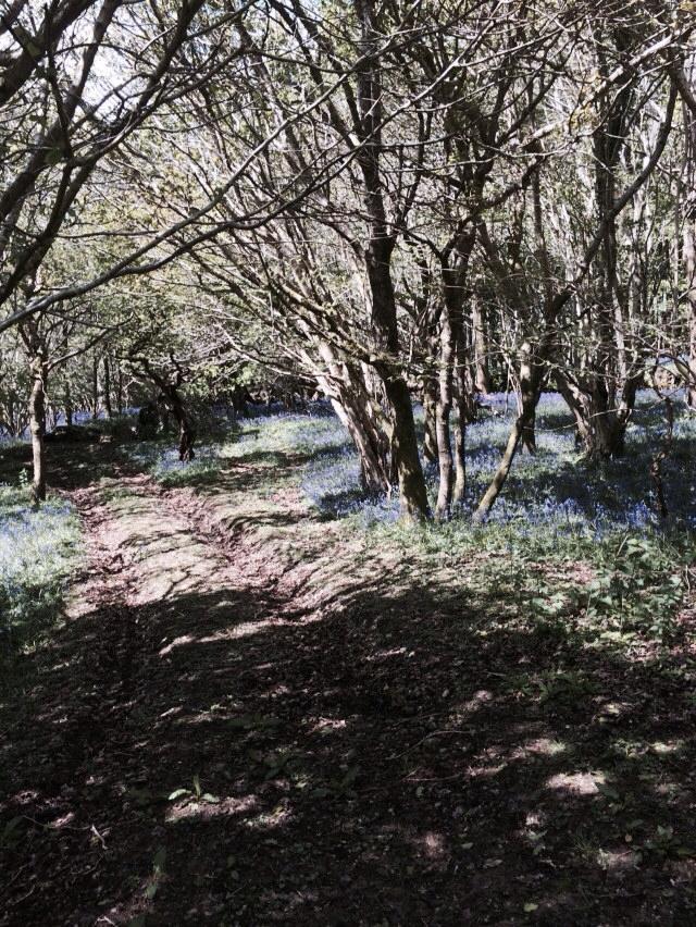 tracks through the bluebells - Liz Peapell